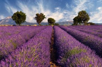 Франция Прованс